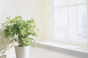 室内空气污染检测与评估